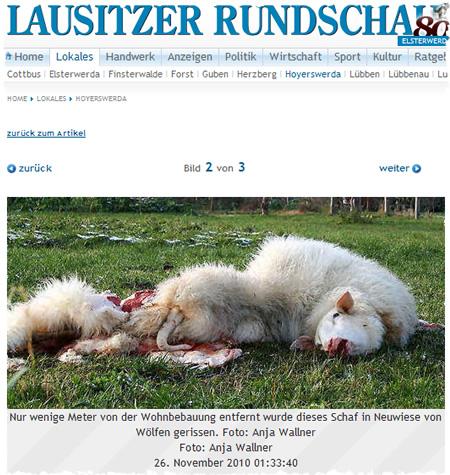 Vom Wolf gerissenes Schaf - Screenshot Lausitzer Rundschau Online